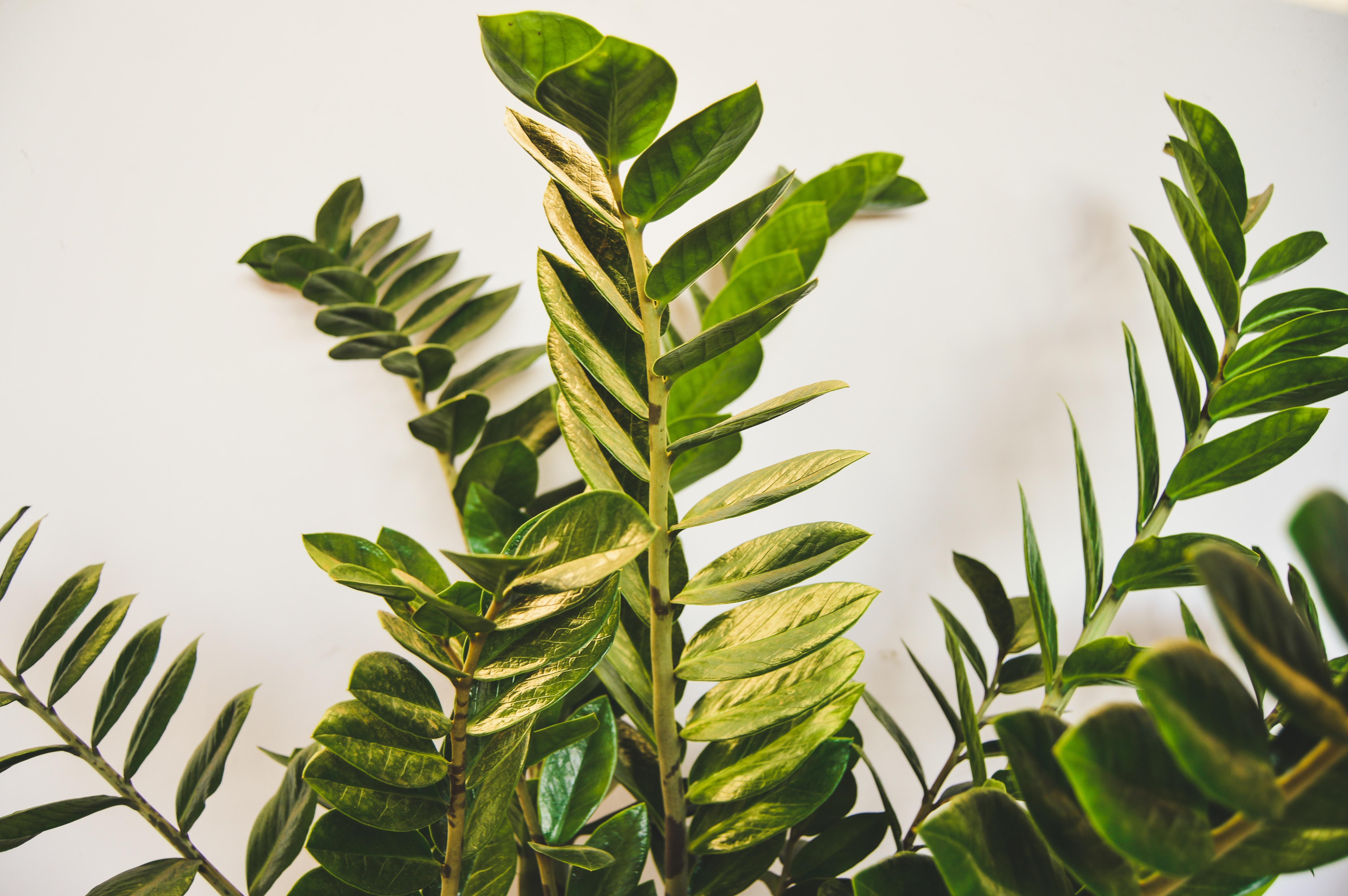 plantas artificiales en mallorca de interior