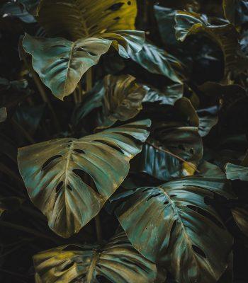 instalar plantas artificiales en mallorca